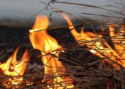 Сено костер огонь